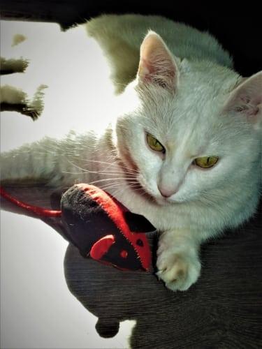 Myška pro kočku ze starého trička