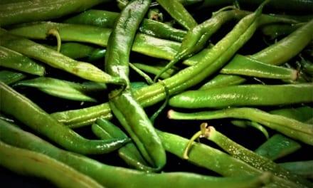Jak správně zamrazit fazolové lusky