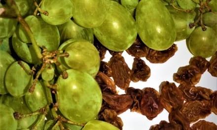 Jak z hroznového vína udělat rozinky