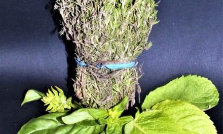 Návod jak rychle usušit bylinky