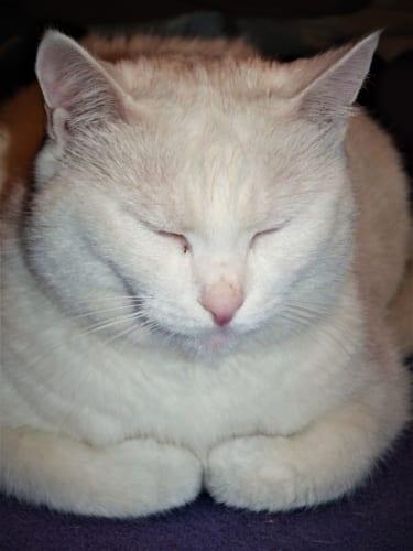 Vánoční cukroví pro psy a kočky