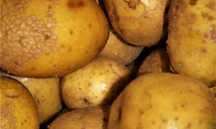 Adresář samosběrů brambor 2019