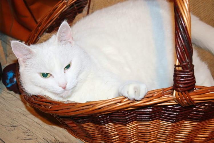Jak vyčistit kočičí pelíšek a domeček