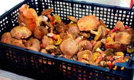Jak zpracovat houby?