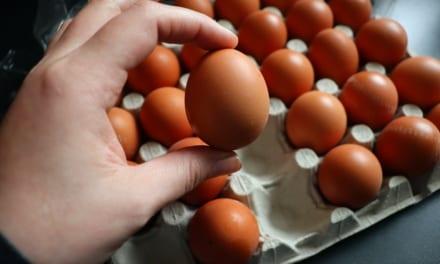 Kolik váží vejce?
