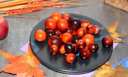 Jak zamrazit rajčata
